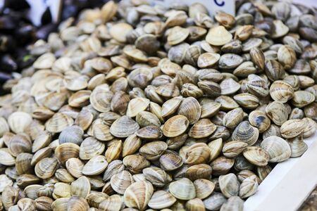fresh clams in fresh market stall 版權商用圖片