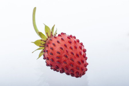 wild strawberry: Wild strawberry fruit Stock Photo