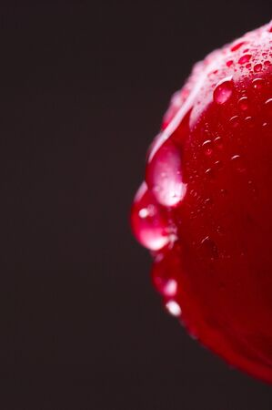sour cherry: Artistic studio shoot of wet, tasty sour cherry with drops, selected focus