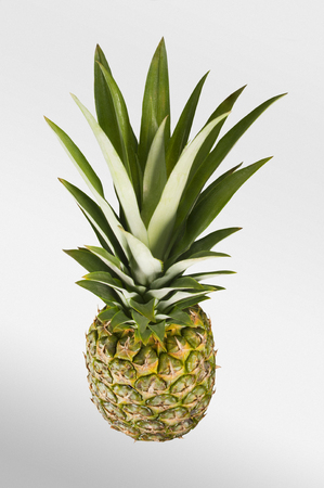 fruta tropical: Pineapple. Tropical Fruit. White Background. Studio shoot.