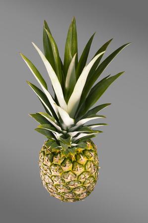 fruta tropical: Pi�a. Fruta tropical. Fondo gris. Lanzamiento del estudio.