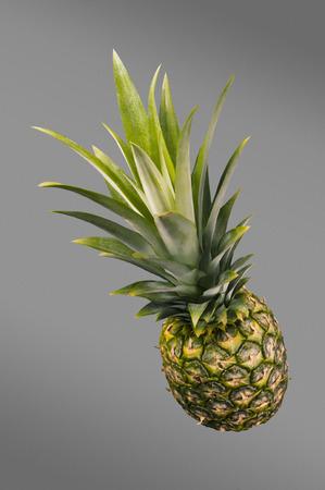 fruta tropical: Pineapple. Tropical Fruit. Gray Background. Studio shoot.