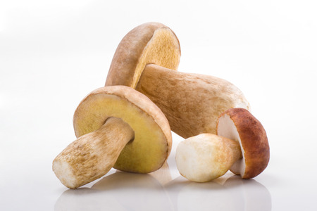 ポルチーニ茸、ポルチーニ茸、フォレスト、食用キノコ