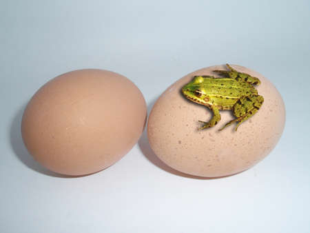 avidity: A frog resting on eggs, Theme of disparity anything