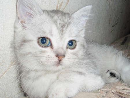 doctoring: Eyes of kitten