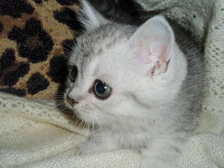 doctoring: small kitten