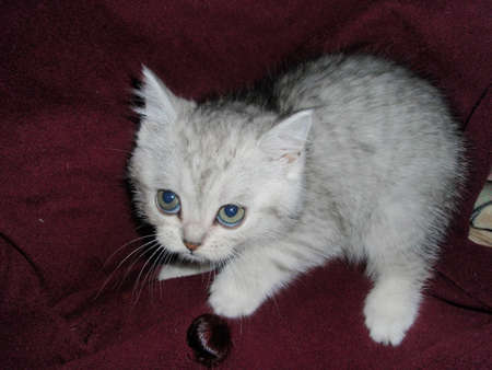 doctoring: Funny angry kitten