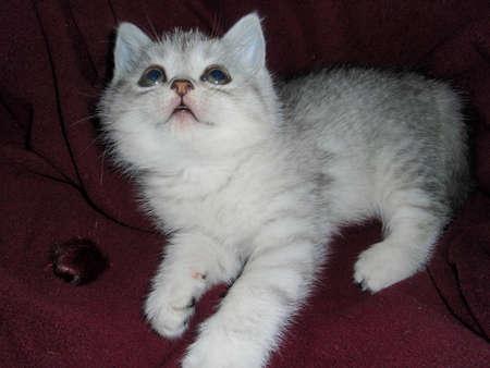 doctoring: cute kitten Stock Photo