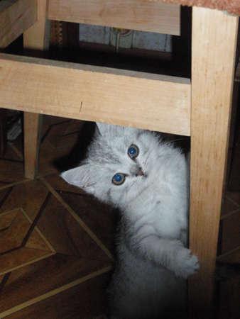 doctoring: Kitten under the stool