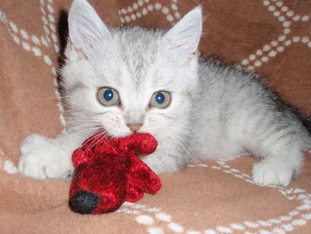 doctoring: Playing kitten Stock Photo