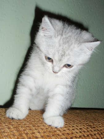 doctoring: Kitten.baby