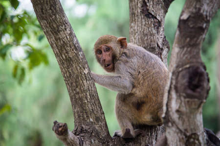 runoff: Monkey on a tree eats banana Stock Photo
