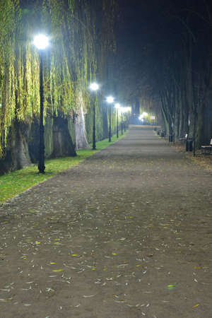 Pedestrian alley after dark illuminated with LED lamps. Trees at night. 免版税图像 - 151128222