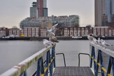 A flock of gulls on the rails of the pier on a cloudy day. Autumn. 版權商用圖片