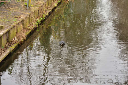 The shore of the canal, trees and a duck on a cloudy early spring day. Spring.