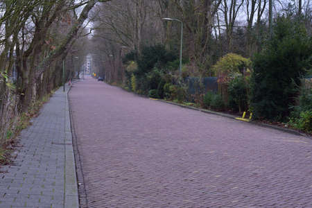 Brick road, sidewalk and lamps among trees on an autumn morning. Autumn.