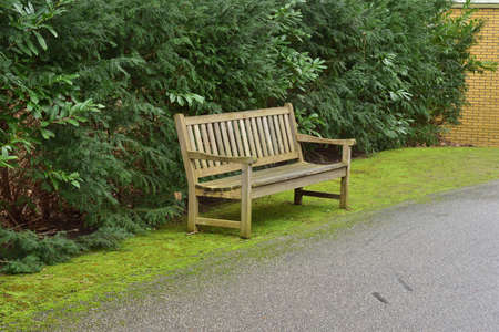 A wooden bench against a green hedge. Day. 免版税图像