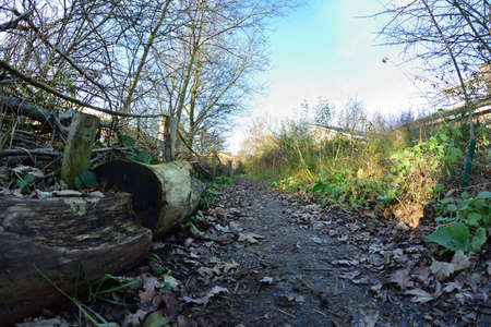 A path among trees and shrubs next to the fence in a fisheye lens from ground level. Autumn.