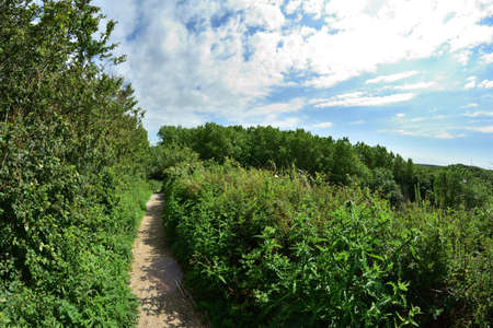 A path among trees on the edge of a slope on a hot summer day. Summer. 免版税图像