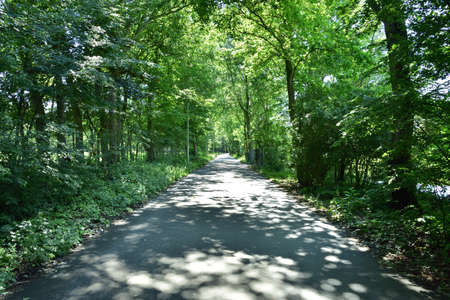 A road hidden in the shade of trees on a hot summer day. Summer. 免版税图像