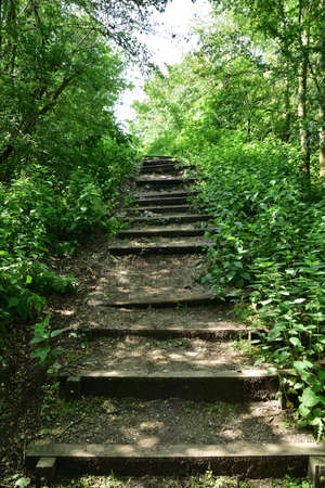 Natural wooden stairs complemented by gravel among the trees in the hot summer south. Summer.