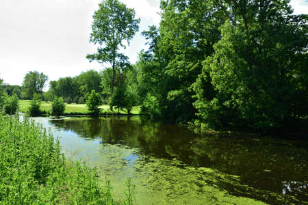The river is overgrown with vegetation on a hot summer day. Summer.