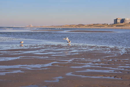 A flock of gulls on the seashore during a sunny afternoon. Spring. 免版税图像