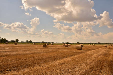 Bales of straw after harvest in stubble under a blue sky and white clouds. Autumn. 免版税图像