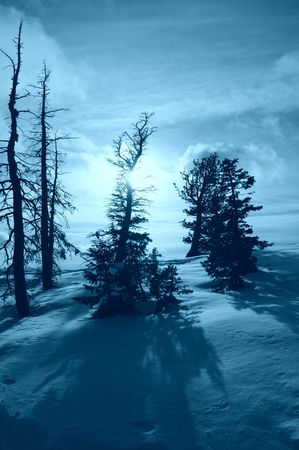 Pine trees on the top of snow covered hill photo