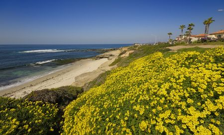 Flowers blooming at La Jolla Beach in a sunny spring day Stok Fotoğraf