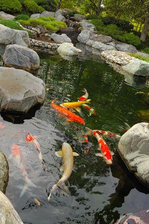 koi pond: Koi pond in a Japanese garden Stock Photo