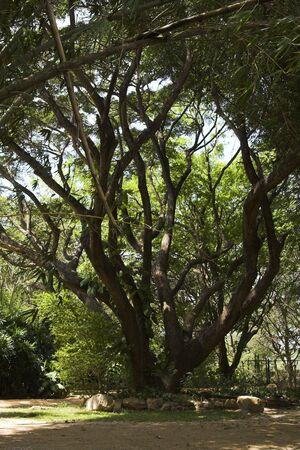 exotism: exotic garden at Sri Lanka Stock Photo