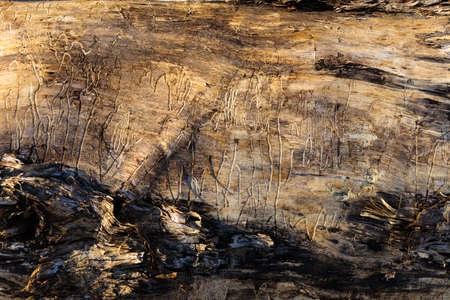 Detailed view of pattern and bark on the side of an old log on the sunny morning before Spring coming Stock Photo