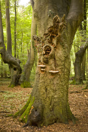 protected tree: tree trunks in natural protected forest Stock Photo