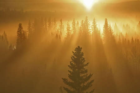 orange rays of light falling through forest