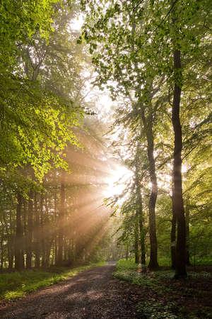 iluminados: rayos brillando a través de árboles forestales