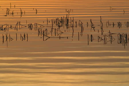 interrupted: lake with orange sky reflection and parallel horizontal waves interrupted by vertical reed,simple composition,symbolising tranquility