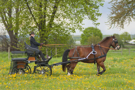 woman coaching horse-drawn carriage Stock Photo