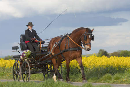 woman horse and carriage in countryside