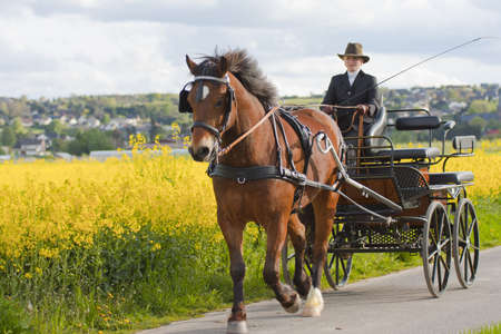 woman horse: woman coaching carriage on country road