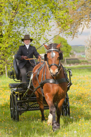 horse-drawn carriage with woman coaching