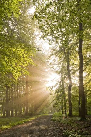 iluminados: Sol de mañana luminoso en el bosque, con la ruta de acceso Foto de archivo