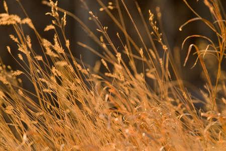 windswept: windswept grass Stock Photo