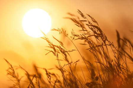 ephemeral: romantic nature scene with sun and grass