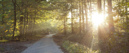 sunlight shining through forest with road in foreground Stock Photo - 12973707