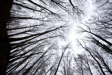 forest shot from below into sky above, trunks appearing as black silhouette no leaves