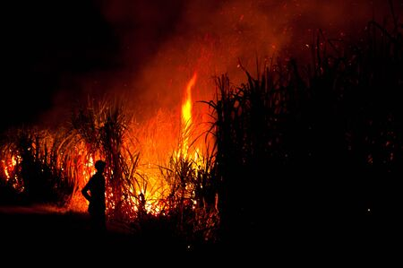 Big fire on the farmland photo