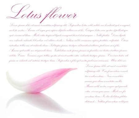 Lotus blaadje op witte achtergrond met ruimte voor uw tekst