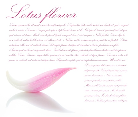 Lotus petal on white background with area for your text photo