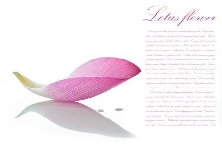 Lotus petalo su sfondo bianco con area per il testo